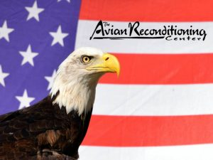 American Eagle Day at Avian Reconditioning Center